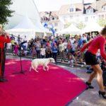 montbeliard-le-26-08-2018-derniere-journee-du-festival-de-momesphoto-christian-lemontey-1535307779 (17)